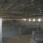 ferma-porci (9)