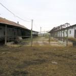 ferma-vaci (1)