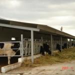 ferma-vaci (2)