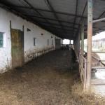 ferma-vaci (4)